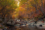 Small river flows through a colorful autumn forest