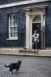 © Licensed to London News Pictures. 02/08/2016. London, UK. Palmerston, the cat belonging to the Foreign and Commonwealth Office, approaches No. 10 Downing Street, home to the Prime Minister's cat Larry. The cats have been seen fighting in recent weeks, and an animal charity has reportedly been called in to arbitrate the dispute. Photo credit: Rob Pinney/LNP
