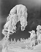 ackroyd_01177-57. Glade Ski Trail sign buried in snow and ice. Timberline, December 16, 1948