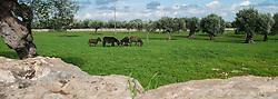 Masseria Minoia sorge a Conversano, in provincia di Bari, all'interno del Parco Regionale dei Laghi e della Gravina di Monsignore e a due passi dal Parco Storico di Castiglione.<br /> La struttura, risalente al XVII secolo, possiede tutte le caratteristiche delle costruzioni rurali tipiche del paesaggio pugliese.