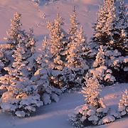 Black Spruce forest near Churchill, Manitoba, Canada.