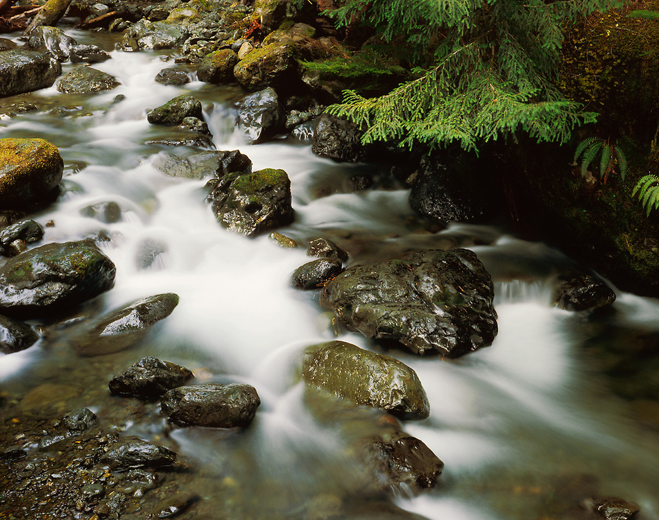 Lena Creek, Olympic National Park, Washington, USA