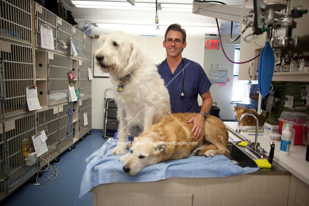 Dr. Andrew Kaplan of City Veterinary Care in New York. .. Photo by Robert Caplin