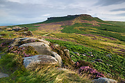Vibrant purples and greens of the heather and bracken in this view of Higger Tor from Carl Wark, and Iron Age Hill Fort on Hathersage Moor. Derbyshire, Peak District, England, UK. Summer.