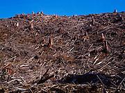 Clear-cut logging in former coastal temperate rain forest, Deep River Drainage, Wahkiakum County, Washington.