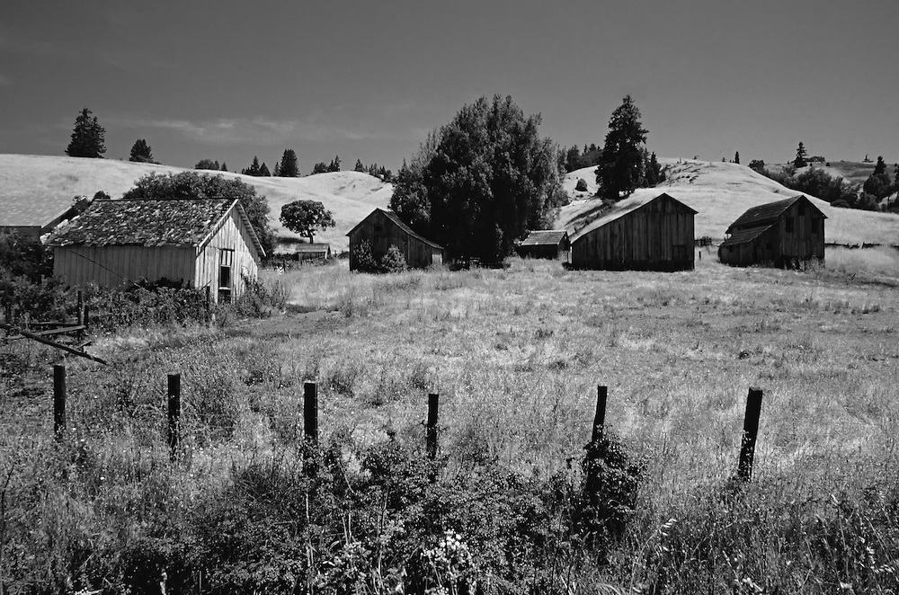Old prairie homestead in Oregon or Washington with dilapidated structures, houses, barn, storage building on the partched Pacific Northwest landscape. A fence circles the property and a few large trees, some pine trees, grow close to buildings. Tree lined hills complete the circle in the background.