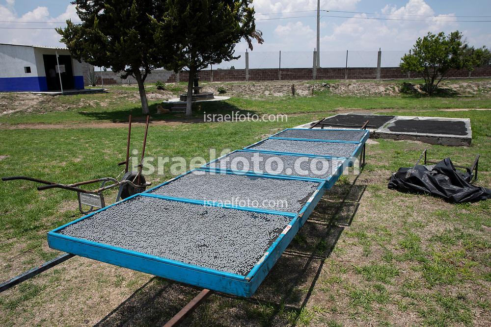 17 mayo 2021, Tultepec, México. Material pirotécnico para espectáculos de fuegos artificiales puesto a secar al sol.