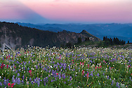 The shadow of Mount Rainier over the Cascade Range from Mazama Ridge in Washington State, USA