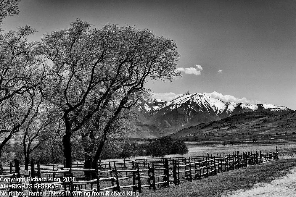 Birding photography from The Great Salt Lake, UT, USA