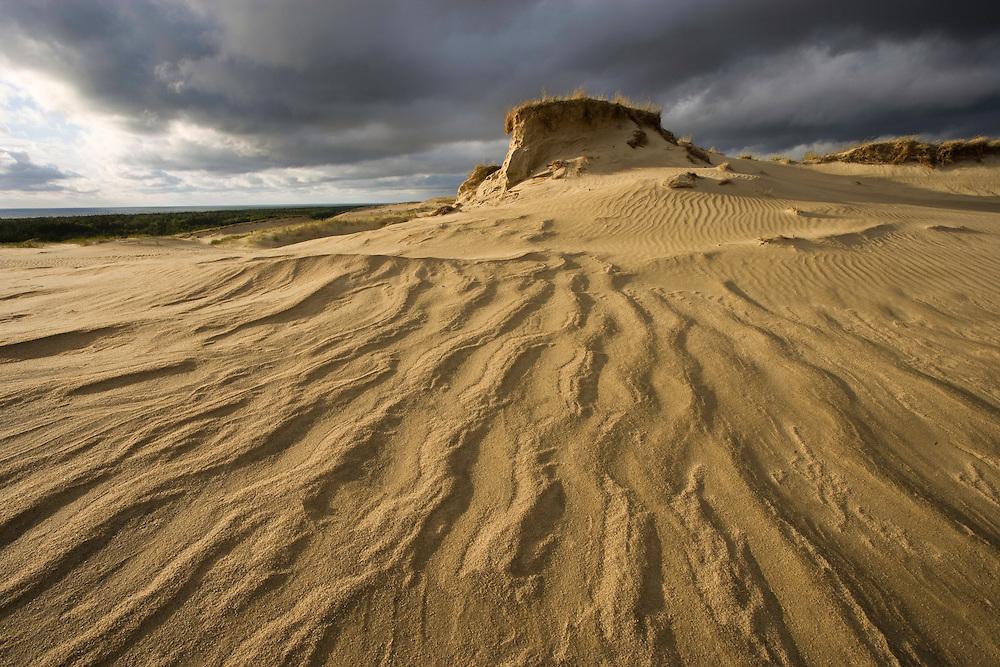 Nagliai sand dunes on Curonian Spit, Lithuania. June. Mission: Curonian Spit, Lithuania, June 2009.