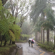 Workers walk along a misty road at Bois Cheri Tea Factory in the highlands of Mauritius.