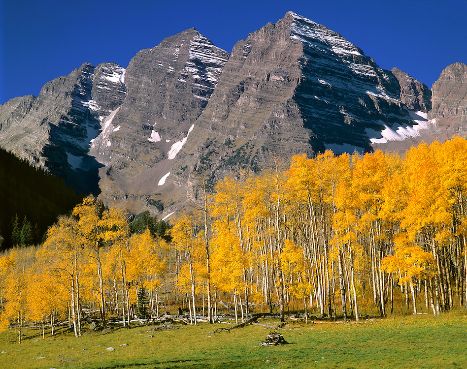 A golden aspen forest softens the stark, grey peaks of Maroon Bells, Colorado.