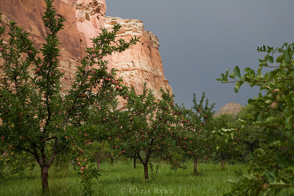 Apple orchard after thunderstorm at Capitol Reef National Park, Utah