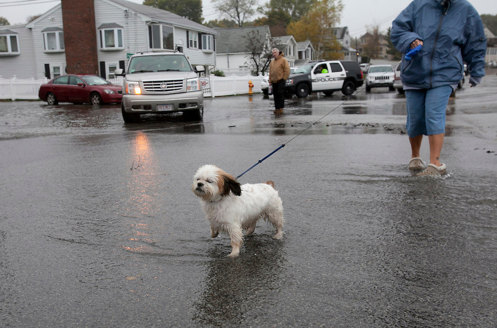 Weymouth, MA 10/29/2012<br /> Bernie, Carol Berens' Shih Tzu, takes a walk through the sea water splashing over the seawall on Wessaugusett Rd at Wittaumet Rd in Weymouth as Hurricane Sandy approaches New England on Monday.