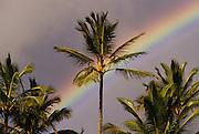 Rainbow behind coconut palm tree, Hawaii