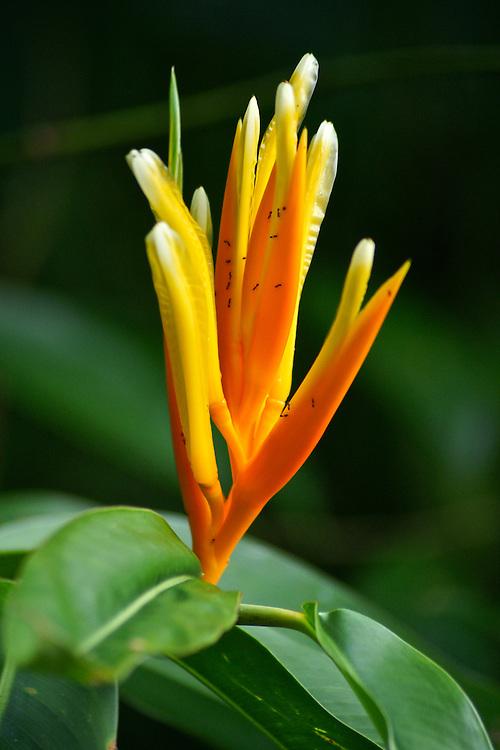 Costa Rica rain forest floral Costa Rica