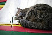 Straßen- und Hauskatze Speedy auf einer Rastafari Bank im Garten.<br /> <br /> Street- and housecat Speedy on a rastafari bench in the garden.