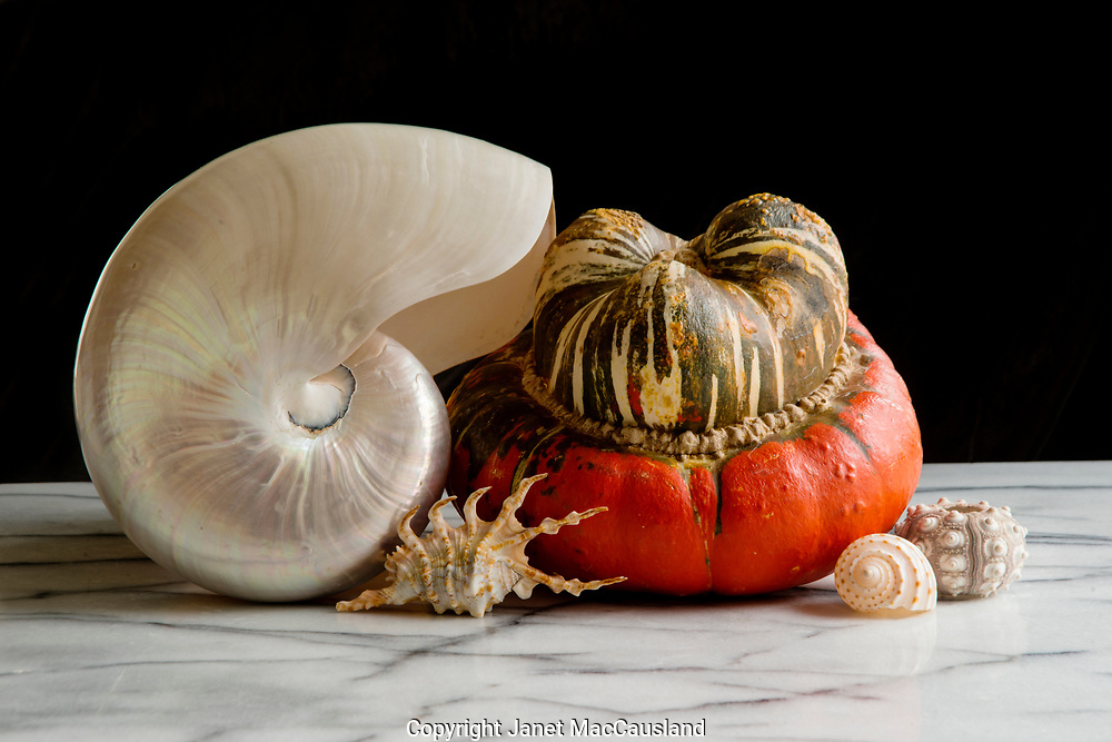 Natural shapes come together in this still life of a Turban Squash with a nautilus and other sea shells on a marble stone table. Note the rim light defining the Nautilus shell.