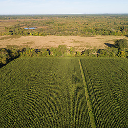 Drone view of a corn field, grasslands, and woods in Middleborough and Halifax, Massachusetts.