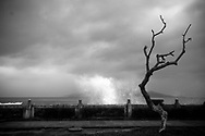 Strong wave crashes against the seawall behind a dead tree, Nha Trang, Khanh Hoa Province, Vietnam, Southeast Asia
