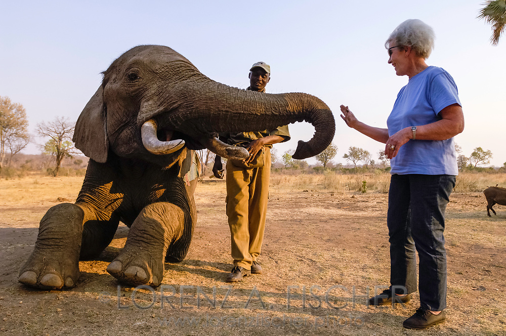 Elefanten-Reiten für Touristen bei den Vicotriafällen