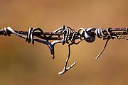 Twigs on a wire. Domaine Fontedicto, Caux. Pezenas region. Languedoc. France. Europe.