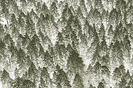 aerial photograph of trees that looks like painting