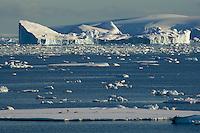 Adelie Penguins (Pygoscelis adeliae)on sea ice in Crystal Sound, Antarctica.