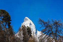 Framed by the trees, the Matterhorn pierces the cobalt blue sky of Zermatt Switzerland high in the Swiss Alps.
