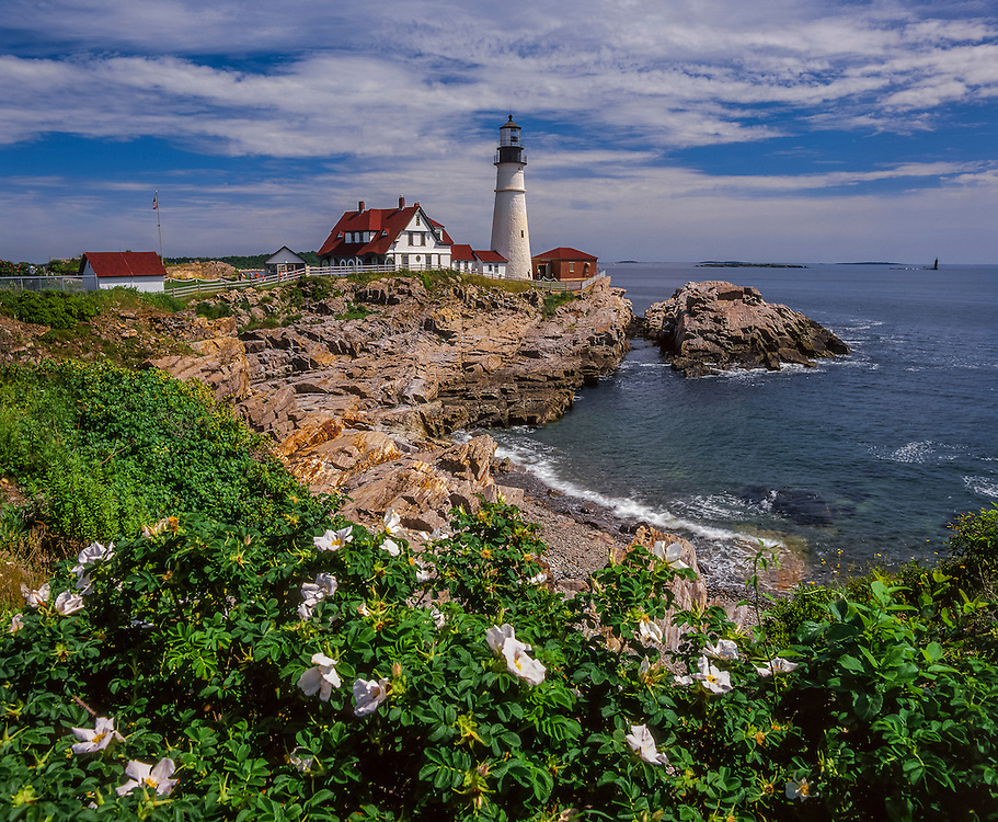 Lighthouse, Portland Head Light with blooming roses & rocky cliffs, summer, Cape Elizabeth, ME
