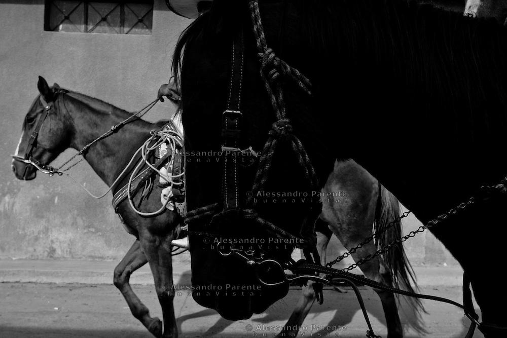 ENG<br /> Black horse<br /> ITA:<br /> Cavallo nero