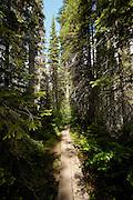 Walkway towards Emerald Lake, Rocky Mountains, British Colombia, Yoho National Park, Canada, North America.