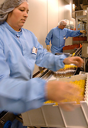 PUURS, BELGIUM - DEC-6-2005 - The Pfizer plant in Puurs, Belgium  is the largest Aseptic or sterile production facility in the world, meaning all products are produced in a truly sterile environment. Pharmaceuticals produced in Puuris include eye-drops in blow-filled sealed bottles, filled vials, filled syringes, and filled ampules which are exported to over 170 countries world-wide. Only 4% of the production is for the Belgian market. The Puuris plant is also the largest European production facility of the U.S. based Pfizer Inc. employing 1600 people. (PHOTO © JOCK FISTICK).