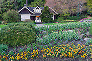 Spring flowers in the Stanley Park Rose Garden flower beds in front of the Rose Garden Cottage (built in 1914) at Stanley Park, Vancouver, British Columbia, Canada