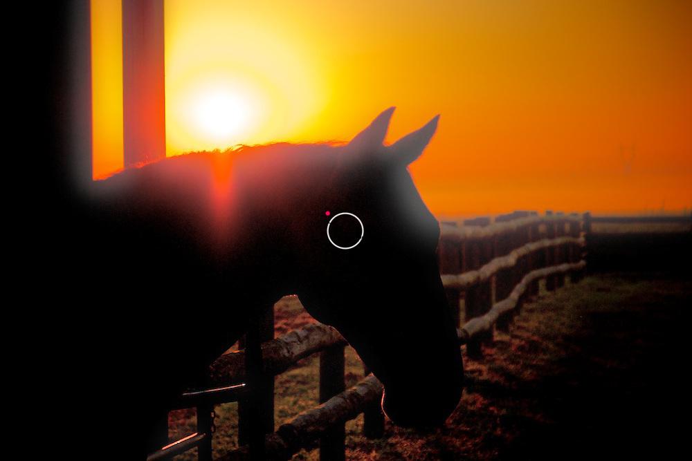 Horse Silhouetten in the Sun