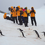 Seabourn guests watch a small grip of Chinstrap Penguins make their way back to the rookery on Half Moon island, Antarctica.