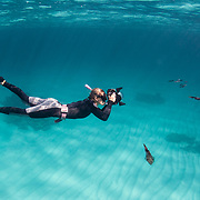 A snorkeler and underwater photographer makes images of Caribbean reef squid in The Bahamas.