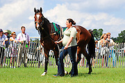 24  March, 2012:  Allison White and HOLD YOUR COURSE in the paddock at Aiken.