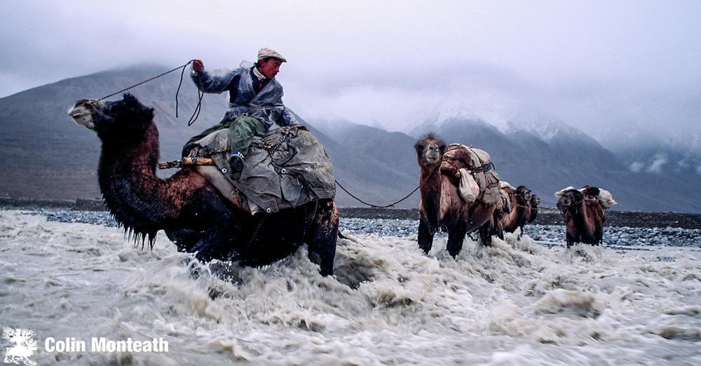 Bactrian camel caravan hauls loads across sidestream, Shaksgam river, Karakoram Montains, far western China, Central Asia
