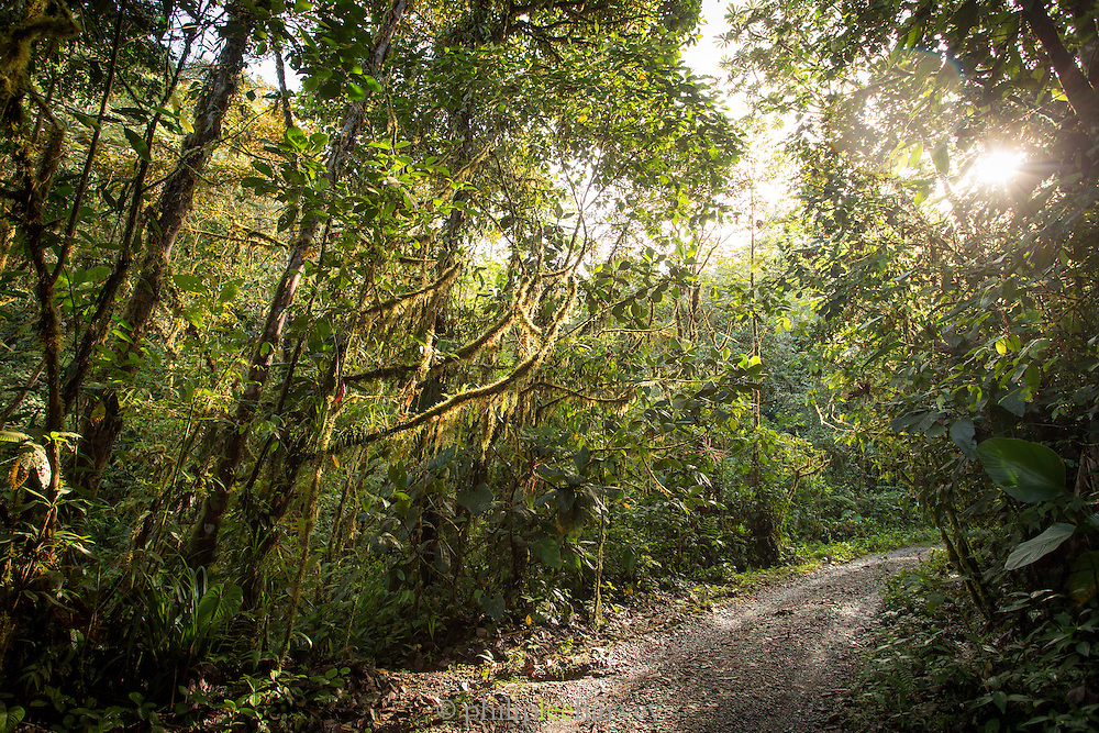 Entrance road to Mashpi Lodge, Cloud Forest, Mashpi Reserve, Distrito Metropolitano de Quito, Ecuador