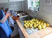 Cleaning quince fruit at kitchen sink inside domestic house, UK