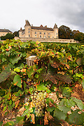 chardonnay vineyard chateau de rully burgundy france
