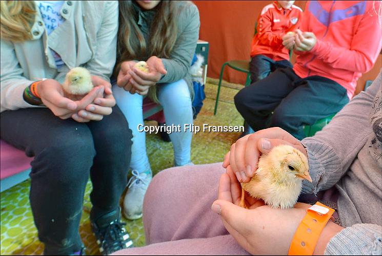 Nederland, Valburg, 28-8-2015Verschillende kinderbouwdorpen. Kuikens knuffelen in ValburgFoto: Flip Franssen