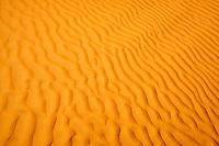 Sultanat d'Oman, gouvernorat de Ash Sharqiyah, désert des Wahiba Sands ou Sharqiya Sands // Sultanate of Oman, Al Sharqiya Region, Wahiba Sands desert