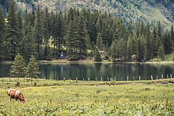 THEMENBILD - eine Kuh grast auf einer Almwiese vor dem Bergsee. Der Hintersee ist ein kleiner Gebirgssee in 1313 m Höhe im Talschluss des Felbertals in Mittersill. Der Bergsee ist ein Naturdenkmal und wurde unter Schutz gestellt. Der Hintersee gilt als Geheimtipp, Erholungsgebiet und ein Platz, den man gesehen haben muss, aufgenommen am 23. Juni 2019, am Hintersee in Mittersill, Österreich // a cow grazes on an alpine meadow in front of the mountain lake. Hintersee is a small mountain lake 1313 m above sea level at the end of the Felbertal valley in Mittersill. The mountain lake is a natural monument and was placed under protection. The Hintersee is an insider tip, a place you must have seen and a recreation area on 2019/06/23, Hintersee in Mittersill, Austria. EXPA Pictures © 2019, PhotoCredit: EXPA/ Stefanie Oberhauser