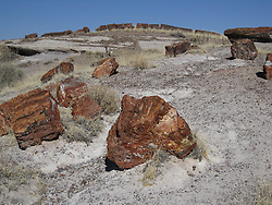 Rainbow Forest Museum at Petrified Forest National Park, Holbrook AZ