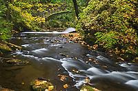 Whatcom Creek in fall, Bellingham, Washington