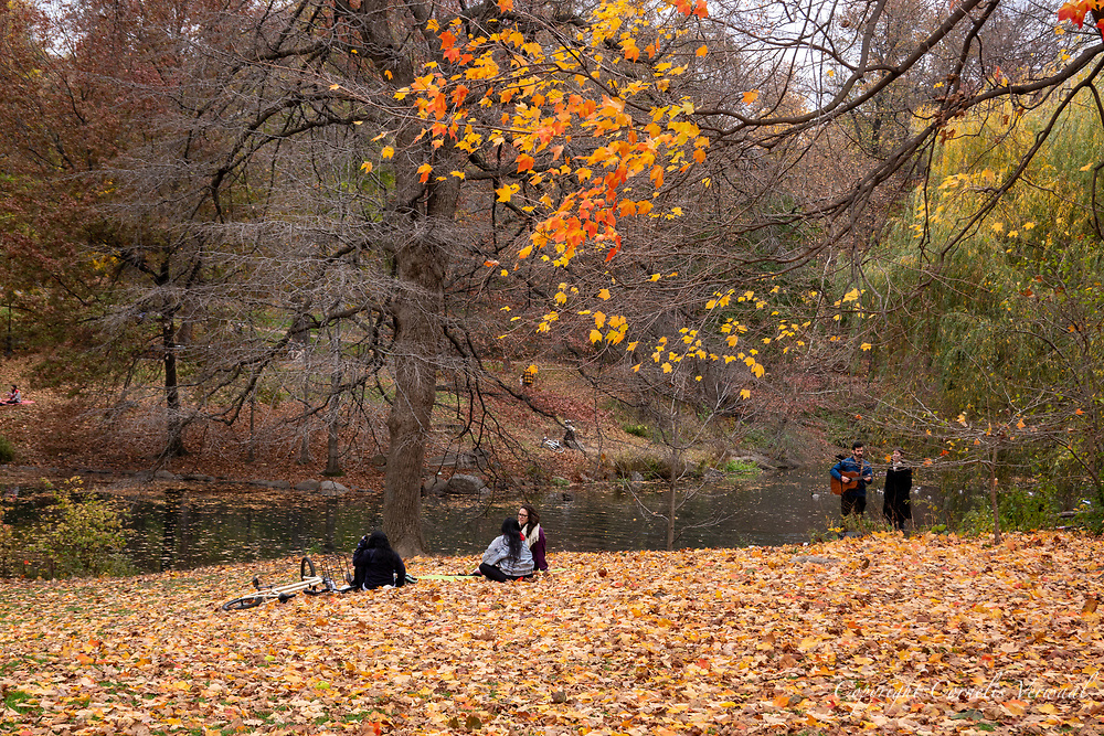 Some trees are still refusing to let go of their colorful leaves; The Pool in Central Park, Nov. 15, 2020.