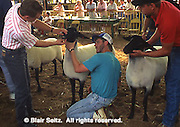 York County, PA. Fair, Livestock Competition