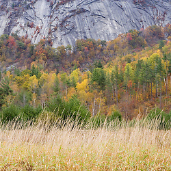 Paper birch trees turn yellow in fall below Owl's Cliff in New Hampshire's White Mountains.  Benton, New Hampshire.